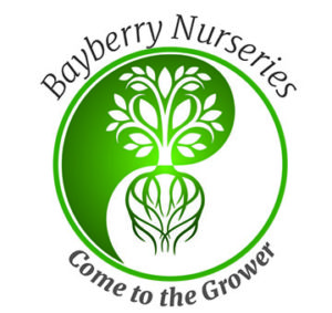 Welcome To Bayberry Nurseries A Whole Grower Located On The Seacoast Of Nh As Part Some Recent Changes We Are Curly Working Customize
